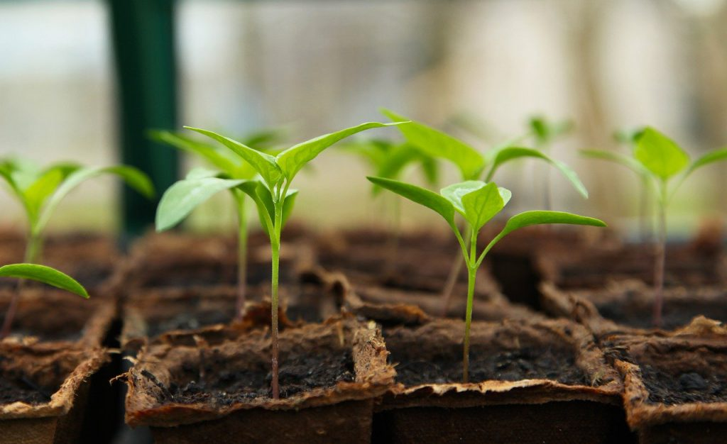 seedling, gardening, greenhouse